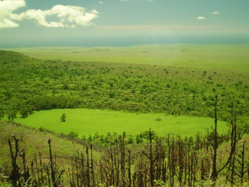 This landscape was taken looking NW from the summit of Santa Cruz Island, showing some native vegetation (foreground), a patch of invasive elephant grass, native Scalesia forest invaded with several species (behind the grass patch), and invasive Avocado forest (behind grass, a dark patch on the left).