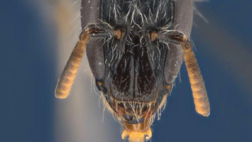 PR 6185 4x bees image1