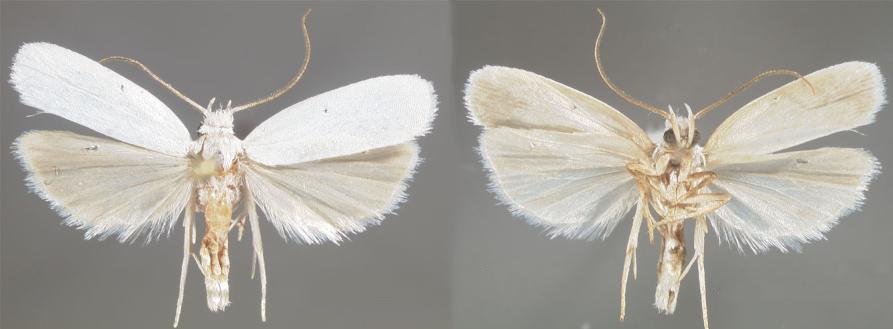 6004_Lepidoptera Florida white