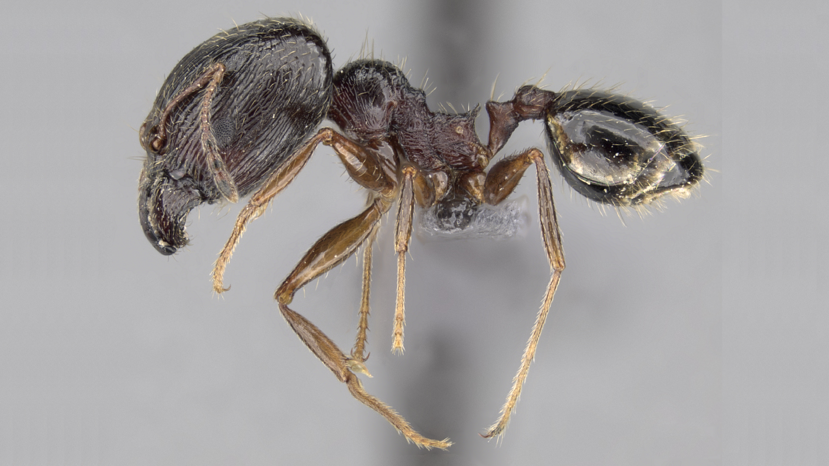 _destructive hymenoptera