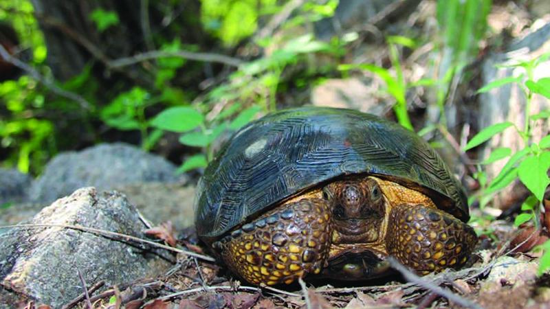 6124_Sister tortoise species img1