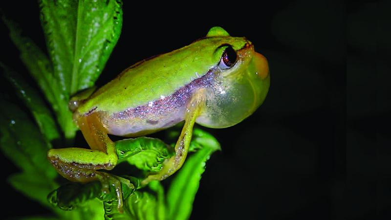 7114_banana frog blog