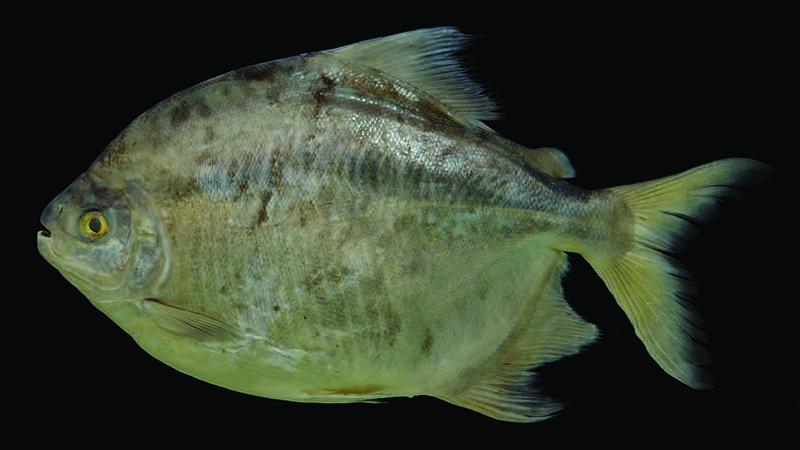 5983_zorro the fish