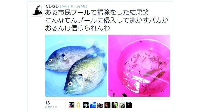 7577_ZK_Fish on Twitter   the tweet
