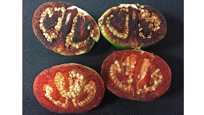 bleeding fruits