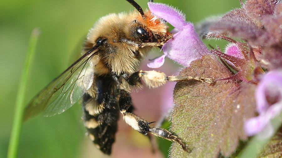 1024-nc-pr-pollinators-9616-blog