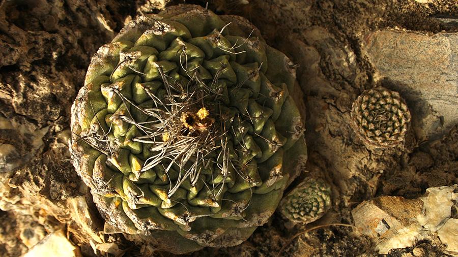 disc-cactus-blog
