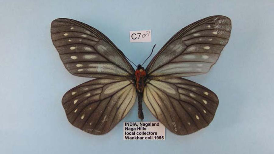 10744_Lepidoptera