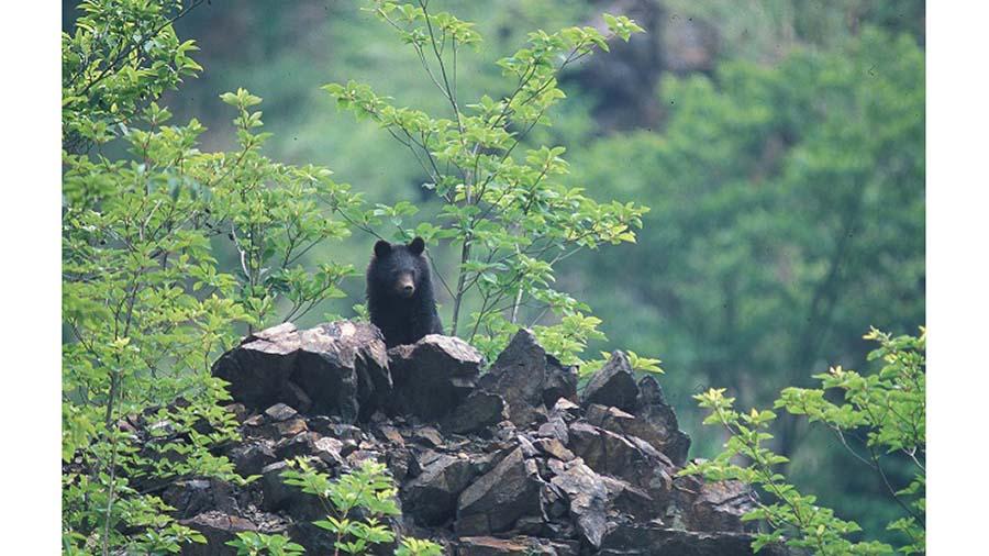 [PR] young bear1