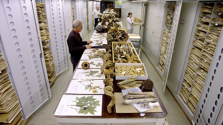 Smithsonian researchers classifying digitized herbarium sheets that have been stained with mercury to build a training dataset.